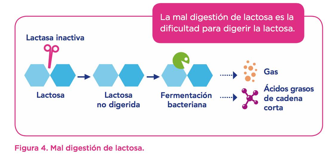 Figura 4 Mal digestion de lactosa