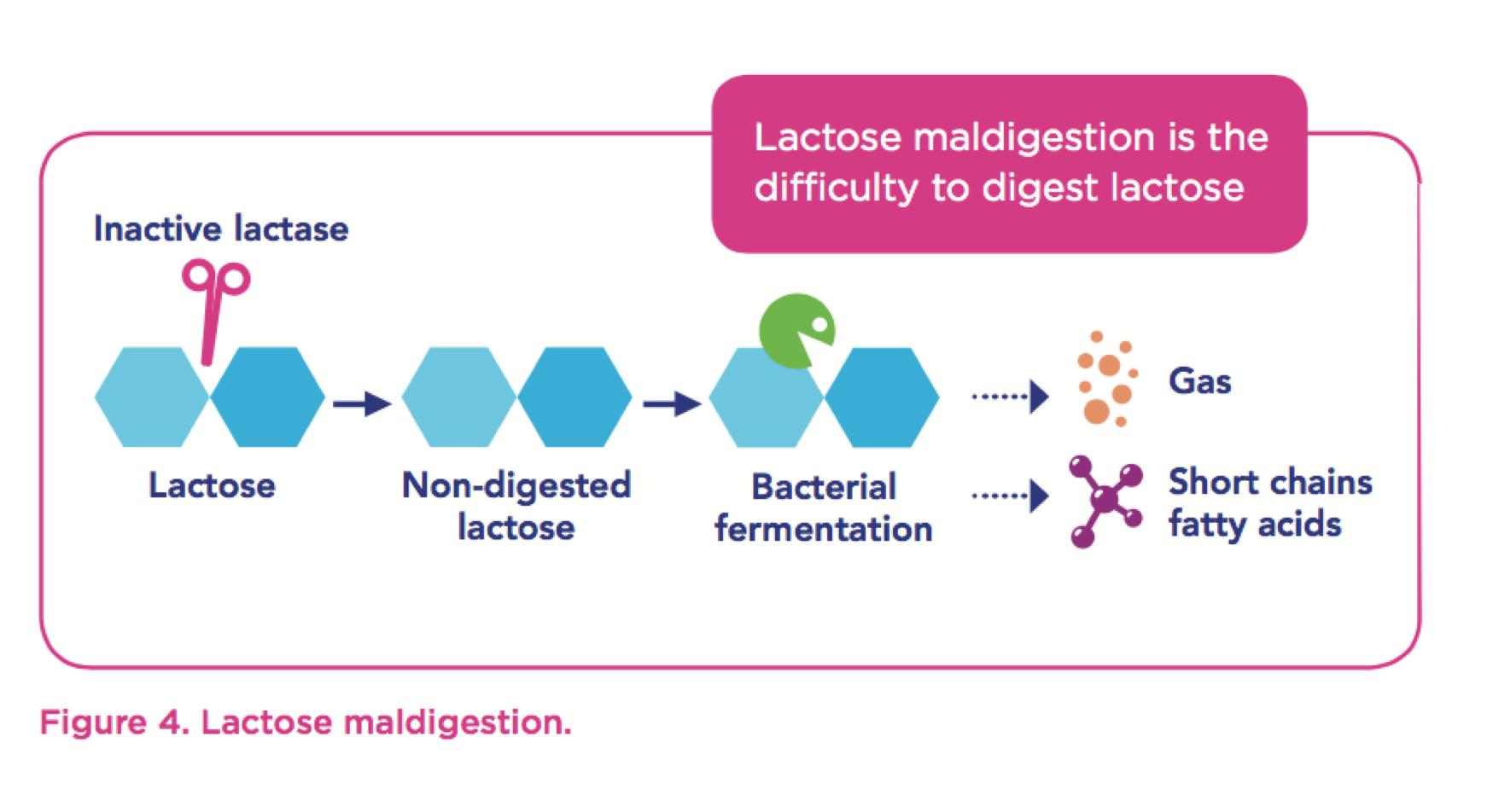 lactose-maldigestion-digest-wgo