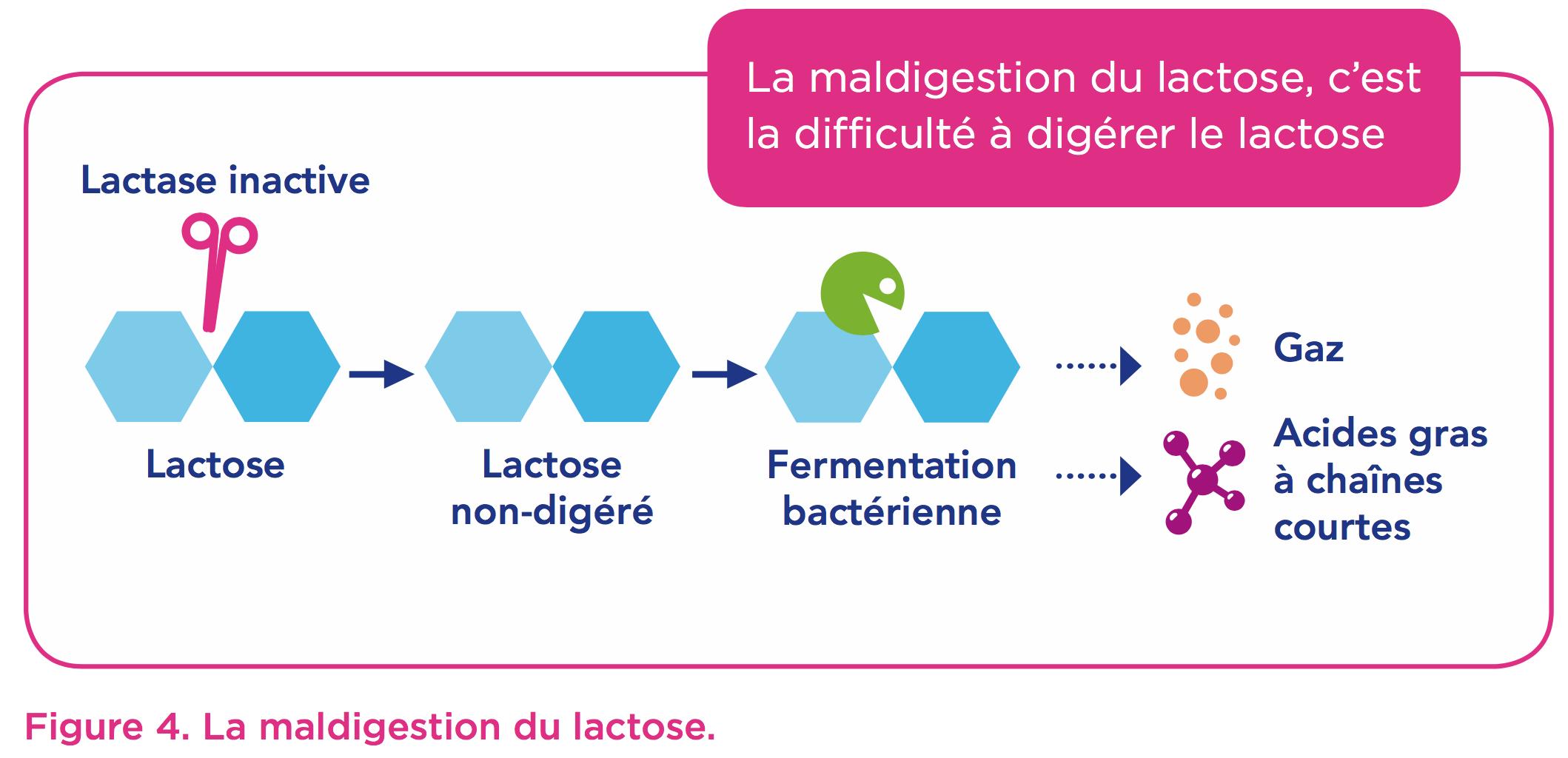 maldigestion-lactose