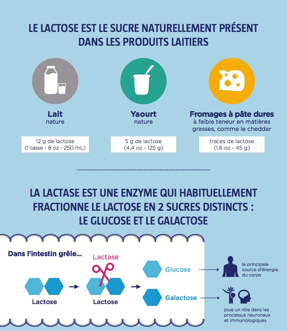 wgo-lactase-enzymes