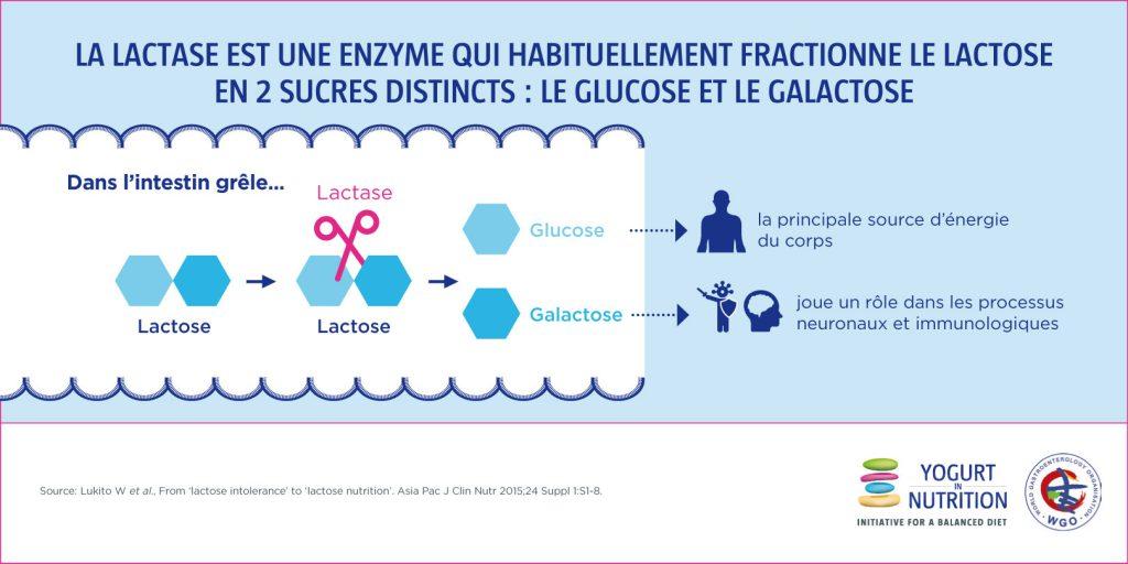 Maldigestion du lactose et lactase