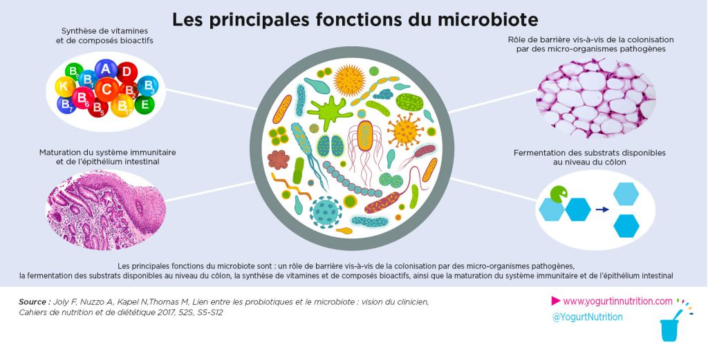 principales fonctions du microbiote intestinal