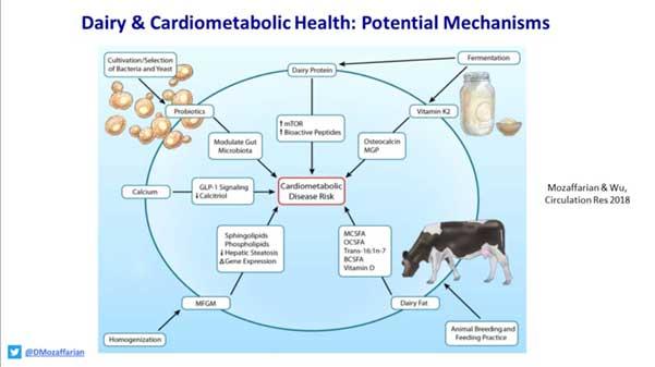 dairy & cardiometabolic health: potential mechanisms by D Mozaffarian