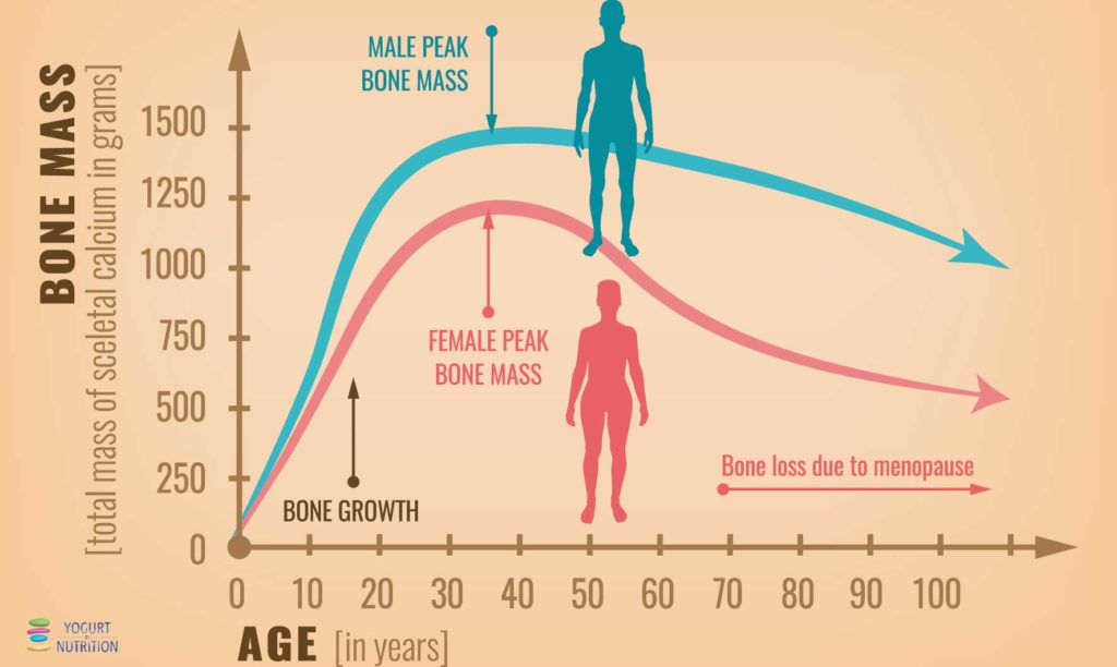 YINI - bone mass evolution
