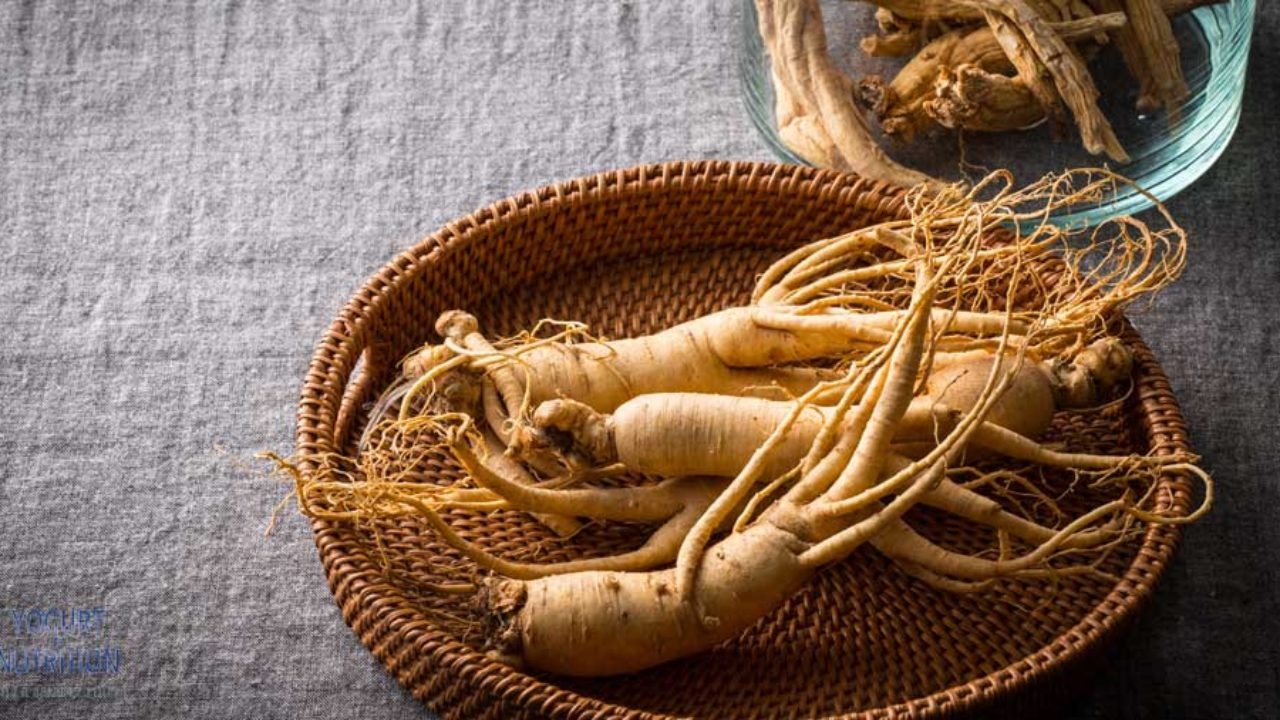Adding ginseng to yogurt or milk may boost their health benefits ...