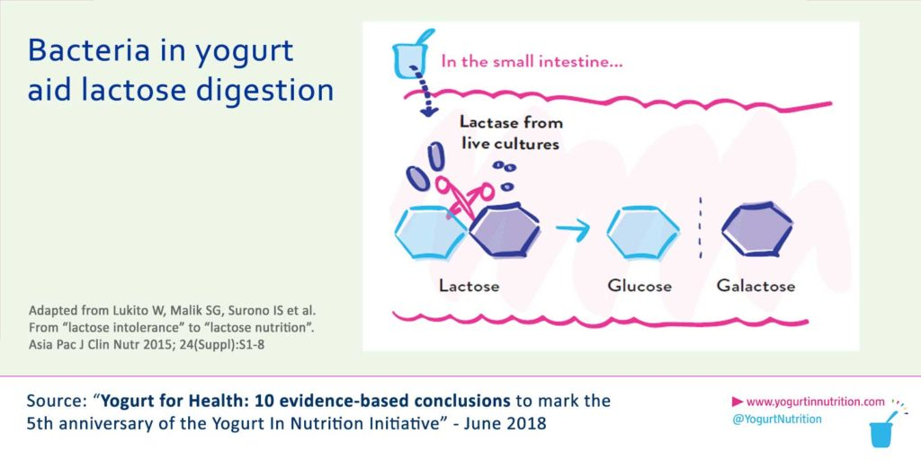 Bacteria of yogurt aid lactose digestion
