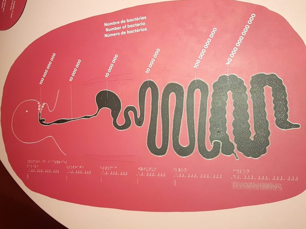 Microbiota exhibition - Cité des Sciences - Paris: the bacteria inside the gut
