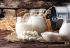 Animal research reveals effect of yogurt on gut bacteria - YINI