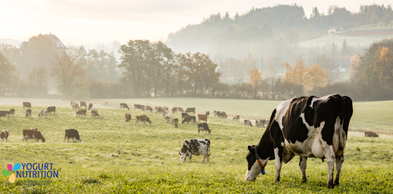 Sustainably boosting milk production could transform lives in low-income countries - YINI