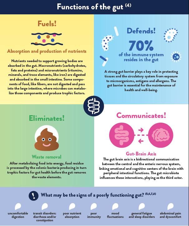 Children gut health infographic ENG part 2 - yogurt in nutrition